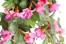 Fab Fuchsia's / Introducing our fab range of Fuchsia flowers