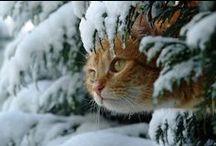 Senza gatti che vita sarebbe?