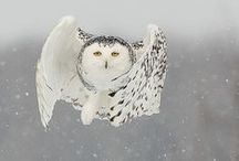 Bowled over by owls