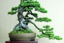 HOUSEPLANTS / Add life to your home and purify the air with indoor houseplants