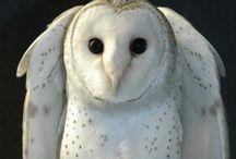 Owls / by Laurie MacAllister Davis
