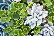 Succulents......... / by Brenda Veeder