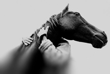 Horses & Women / A lovely horse is always an experience. It is an emotional experience of the kind that is spoiled by words. ..... ..... ..... ......  ~ Beryl Markham