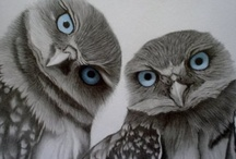 All Things Owl / by Nicole Mitchell