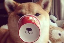 Shiba Inus / I'm always going to have a soft spot for shiba inus - I've been owned by a grumpy long-haired one for fourteen years now.  His name is Kimahri - http://foxloft.com/exotics/kimahri