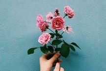 flowers / floral / flower / pretty