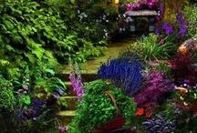 Photosynthetic Appendages  / Petals & Pollen = Zen