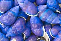 shells, beaches,ect / by Jacqui Milton