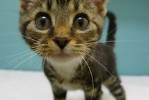 Adorable | Cats