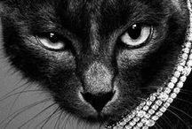 Animals / by Karen Canales