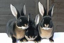 ZOOLOGY - Bunnies * / by Bea Rudd
