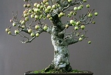 Bonsai Tree *