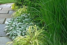 GARDEN - Ornamental Grass (r*)