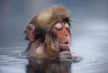 Monkeys for Otto! / Monkeys galore / by Eira Braun-Labossiere