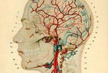 Health | Fibromyalgia Relief