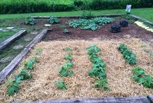 My Garden / Picture gallery and growing tips of my garden. (No links here.) / by Shonnie Tabers