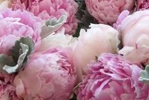 Peonies and