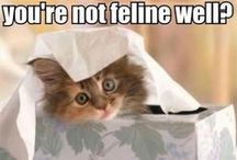 Funny, Funny, Funny / The funniest things I have seen or Pinterest. Be prepared to laugh!