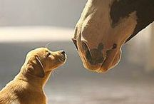 Furry, Fluffy, Fuzzy / Puppies, kittens and all creatures big and small. / by BlogHer
