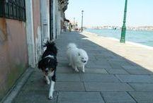 Dogs of Venice