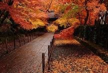 Autumn Tears / by Danny Salim Schasz