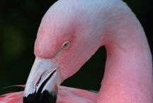 Flamingos / by L Kuttig
