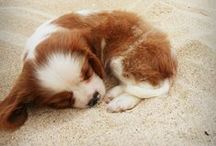 Puppy Love / Cute dogs, puppies, pest control tips, adorable dogs, cute animals, home organization, keeping your home clean with pets.