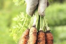 Growing your own organic food