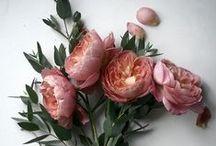 - Flower Flower -