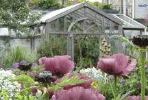 A garden under glass