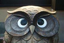 Owl / by Maen CG