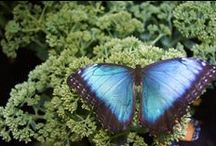Butterflies, Bugs & Birds / Check out all things Butterflies, Bugs & Birds, just like our exhibit!