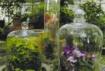 Terrariums / A tiny garden in your home