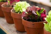 Gardening / Growing Tips & Techniques, Herbs, Gardening in Pots