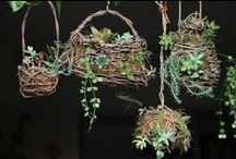 Succulents display / Handmade birdcage with natural materials and succulents display