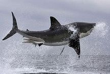 SAVE OUR SHARKS / #GHTAGTEAM #SAVEOURSHARKS