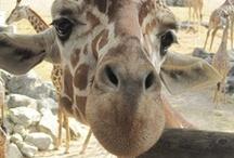 Brevard Zoo in Viera