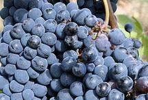 Wine Tourism / #Wine Regions to visit with extraordinary #terroir