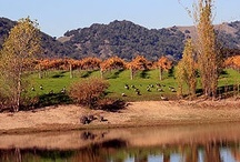 Napa Valley #Wine and #Food / Napa Valley #Wine Tourism