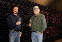 Experts in Pinot Noir / by Gloria Ferrer Caves & Vineyards