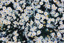 // florals //