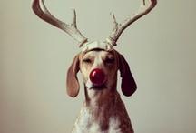 Navidad / by sritasux