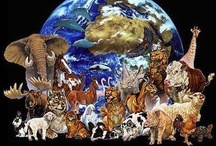 human activity impact on animals & the planet