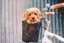 // pup love //