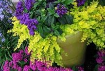 Container Gardening ╰⊰✿☀️✿⊱╮ / by Susan Moore