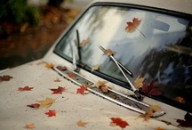autumn / This year I like Autumn.