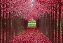 Trees/árvores