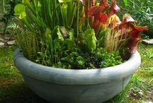Watergarden / How-to, inspiration, and photographs