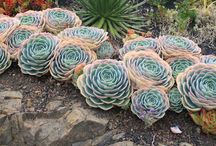 Xeriscape / How-to, inspiration, and photographs