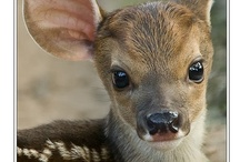 Animals: Cute animals / by Lisa